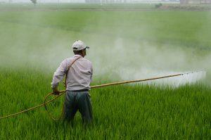 Homem borrifando agrotóxicos na plantação